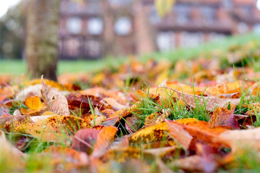 Autumn Chaucer-7618